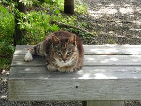 北鎌倉円覚寺の猫