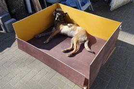 Die Welpenbox - der Grundriss steht - Joeli darf probeliegen :-)