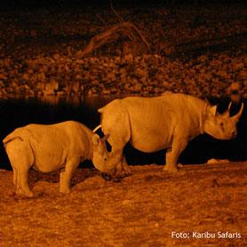 Nashörner auf einer Campingsafari bei Nacht