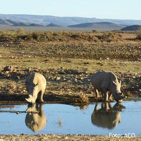 Wasserloch auf einer Safari, Südafrika