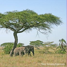Kenia und Tanzania Lodgesafaris