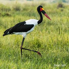 Die Vogelwelt in Uganda