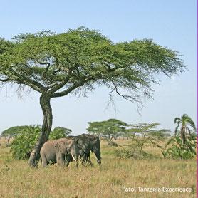 Lodgesafari in Tanzania