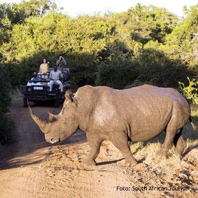 Nashorn auf einer Pirschfahrt in Südafrika