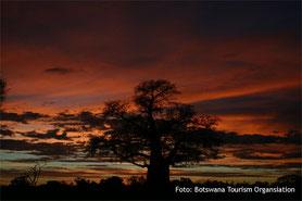 Botswana Lodgesafaris Sonnenuntergang