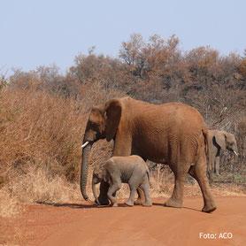 Lodgesafari Tanzania