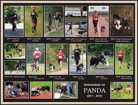 Lifestyle's anxious to please - Panda