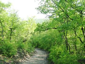 Дорога к св. источнику