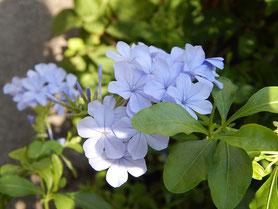 横浜市 中区 末吉町 パン工房 カメヤ 店先の季節の花