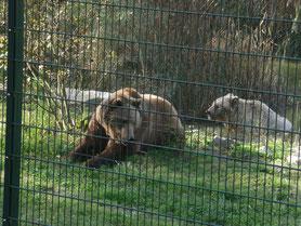 Bären Freizeit