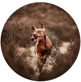 Hundefotos_Hund_Fotografie_Hundefotograf_Tierfotograf_Haustier_Shooting