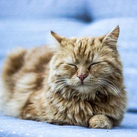 rote Katze liegt mit geschlossenen Augen am Bett