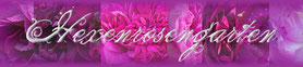 Hexenrosengarten Rosenblog Rosenseite Christine Rosenbilder Rosenrezepte Rosentipps Rosenideen Rosengarten