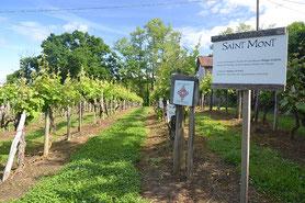 Visiter un domaine viticole bio dans le Gers, en Occitanie, à 20 minutes de Lassenat éco-maison d'Hôtes en Gascogne, chambre d'Hôtes de charme, table d'hôtes gourmande, bio et locavore, destination campagne, écotourisme et slowtourisme.