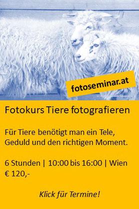 Fotokurs Tiere fotografieren