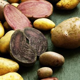 Sortenvielfalt Kartoffeln