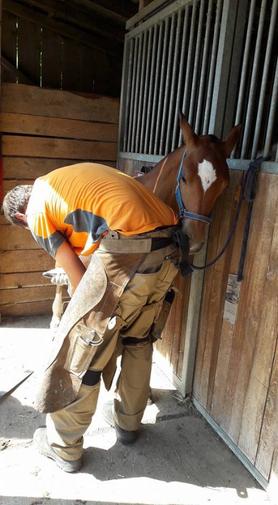 Hufpflege bei Fohlen. Stellung muss von klein an perfekt sein. Studer Hufboy