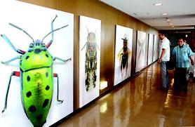 石垣市市民会館をはじめとする5会場でアート作品がお目見えした=29日、市民会館特設会場