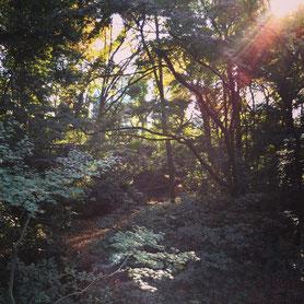 都会のド真ん中とは思えない、自然を感じる明治神宮