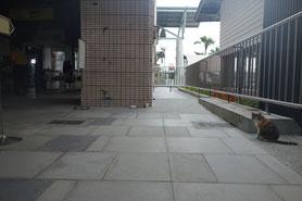 台東駅の猫駅長