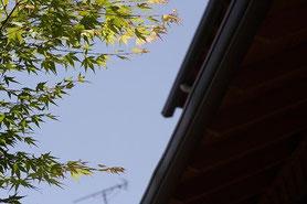 もみじ 新緑 浜松市 設計事務所