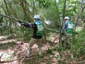みどりが丘公園での竹林整備活動