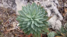 Hübsche Pflanze, von denen plötzlich ganz viele am Wegrand stehen. Einige haben zusätzlich noch rote Blätter. Toll!