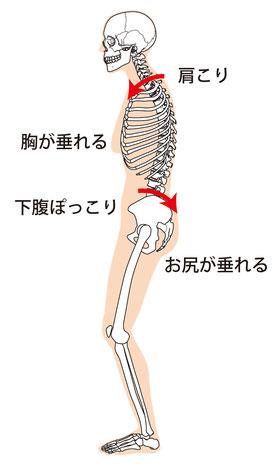 猫背・背中のハリ・背骨のゆがみの原因は頭蓋骨、腕のねじれから