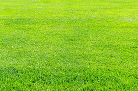 素晴らしい芝の画像。