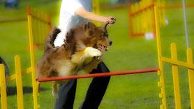 Erfolgreiches Mentaltraining im Hunde- und Pferdesport.