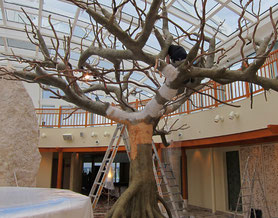 Anfertigung eines Mangrovenstammes, Gesamthohe Baum 650 cm, Kronendurchmesser ca. 550 cm
