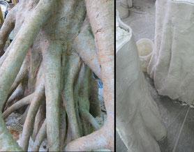 Details der Mangroverinde