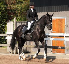 traslado a competiciones, transporte a competiciones, competiciones de caballos, eventos de caballos, rutas a caballo, caballos, yeguas, ponys,