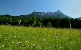 Alpen , Säulong , Lechtal , Blumenwiese , Berglandschaft , Landscape , Montains