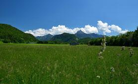 Berglandschaft , Panorama , Landschaft , berge , Tirol , Wandern , Österreich , Wiese , Blumen , Blauer Himmel , Wolken , Natur , Sommer , Idylle , Mountains , Austria , Trekking