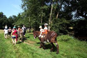 En Limousin : balade en famille avec les Ânes de Vassivière
