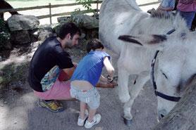 visite avec des enfants en Limousin : découverte de l'âne en famille