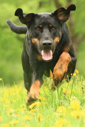Hundeshooting fotoshooting hund hunde hundefotograf studio outdoor originalgröße hochauflösend