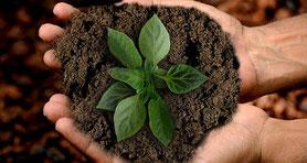 Hände halten Erde mit Pflanze.