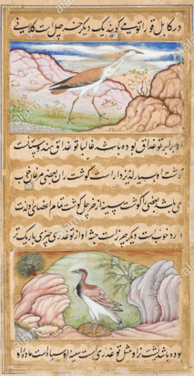 crane_painting_mughal_miniature_painter_s_blog