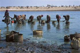 Femmes Kanembous récoltant la spiruline à la surface du Lac Tchad