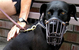 Toutou pour le chien : Méfiez-vous des contrefaçon