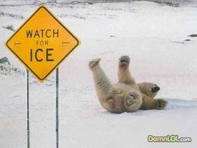 Wow, enen a polarbear!