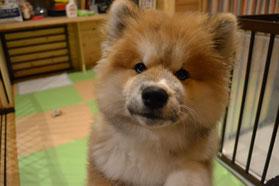 熊美ちゃん~!可愛い顔して何かいたずらたくらんでるなぁ?
