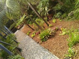 Clip n Clean Gardening