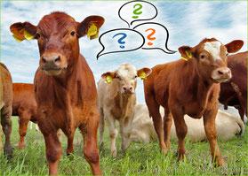 FAQ Rinder~Patenschaft | Mein BioRind