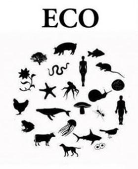 Eco statt Ego