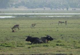 Viele Tierarten auf einem Fleck