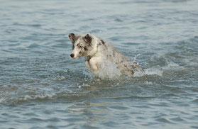 Minx hatte Spass am Meer ...