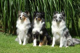 Belle mit ihren beiden Töchtern aus dem I-Wurf